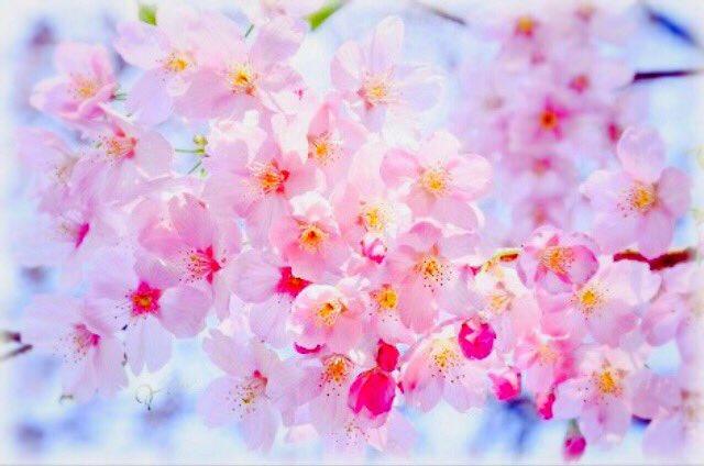 4.5(日)名古屋Candyお花見ウォーキング