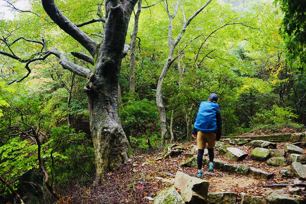企画変更【神戸】六甲山ピクニック オフ会(フリー限定)